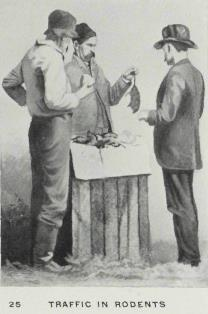 From The Elmira Prison Camp (The American Civil War Collection)