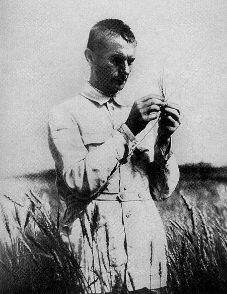 Lysenko_in_field_with_wheat.jpg