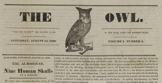 The Owl 08141830.JPG