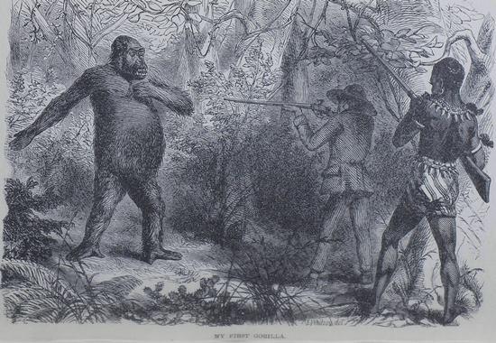 Du Chaillu Gorilla.jpg