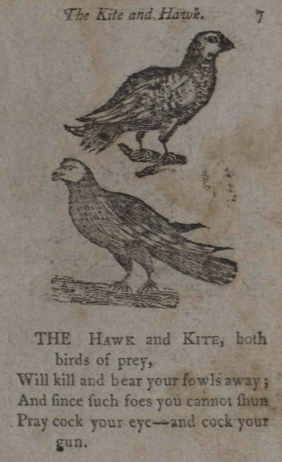 Hawk and Kite.jpg