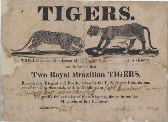 Tiggers.jpg